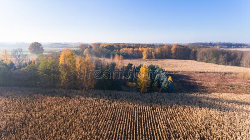 Vista aérea desde arriba del campo de maíz después de la cosecha, del bosque y de tierras de labrantío en puesta del sol del otoñ imagen de archivo libre de regalías