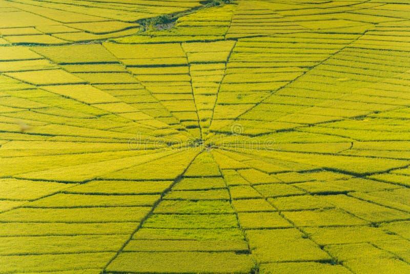 A vista aérea do arroz da Web de aranha de Lingko coloca fotos de stock
