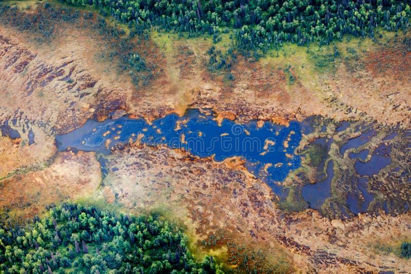 Vista aérea do lago em uma floresta do taiga imagem de stock royalty free