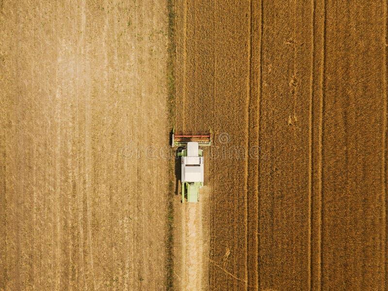 Vista aérea do trigo harevsting da ceifeira de liga foto de stock royalty free