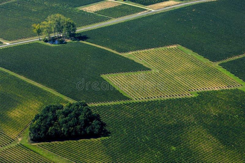Vista aérea do vinhedo do Bordéus, França fotografia de stock royalty free