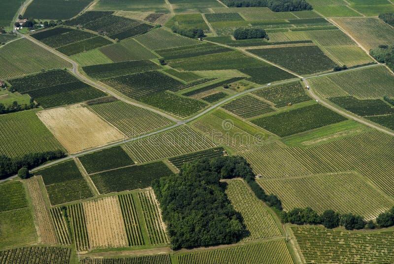 Vista aérea do vinhedo do Bordéus, França imagens de stock
