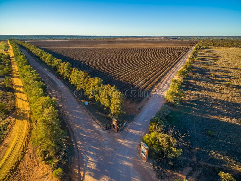 Vista aérea do vinhedo do inverno no por do sol foto de stock