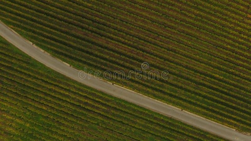 Vista aérea do vinhedo no outono, França de Saint Emilion fotografia de stock