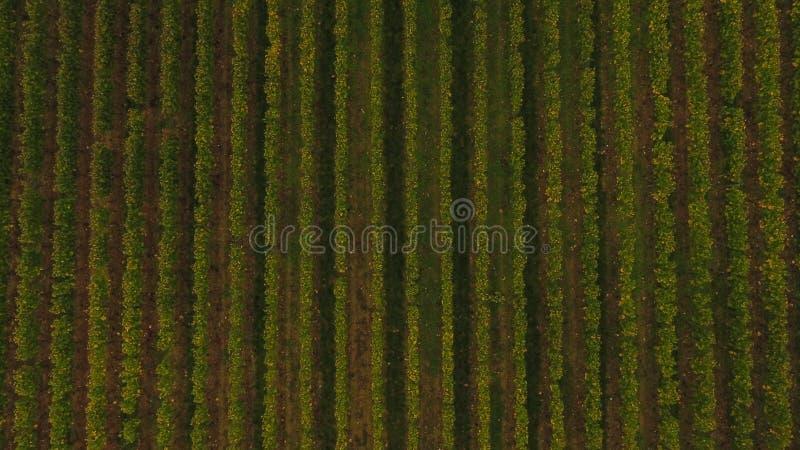 Vista aérea do vinhedo no outono, França de Saint Emilion imagem de stock
