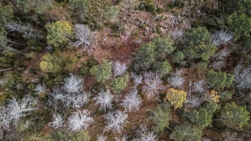 Vista aérea do zangão, com a floresta portuguesa típica, a coroa das árvores, os pinhos e os carvalhos foto de stock royalty free