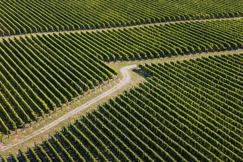 Vista aérea dos vinhedos foto de stock