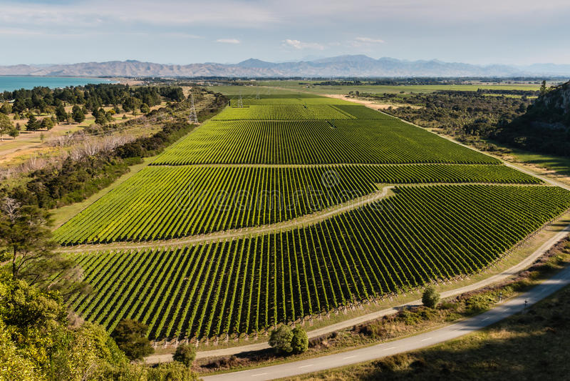 Vista aérea dos vinhedos no vale de Wairau foto de stock