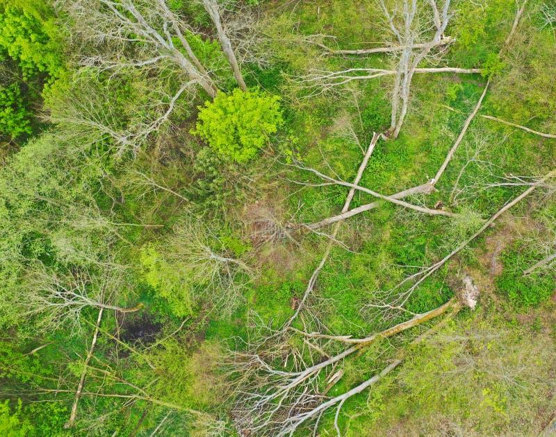 Vista aérea em árvores de folhas mortas caídas e destruídas após a tempestade do forte vento como o furacão ou o remoinho imagem de stock
