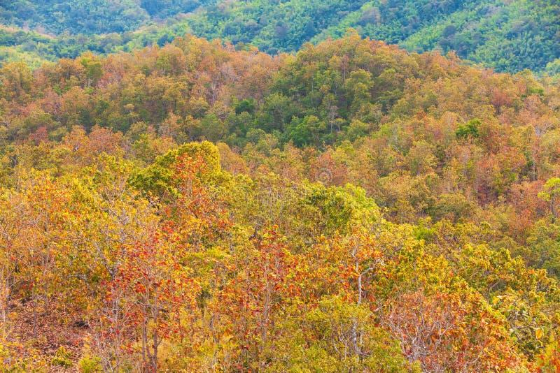 Vista aérea, floresta tropical colorida no inverno, cores bonitas das folhas do verde ao vermelho na mudança da estação, mont imagem de stock royalty free