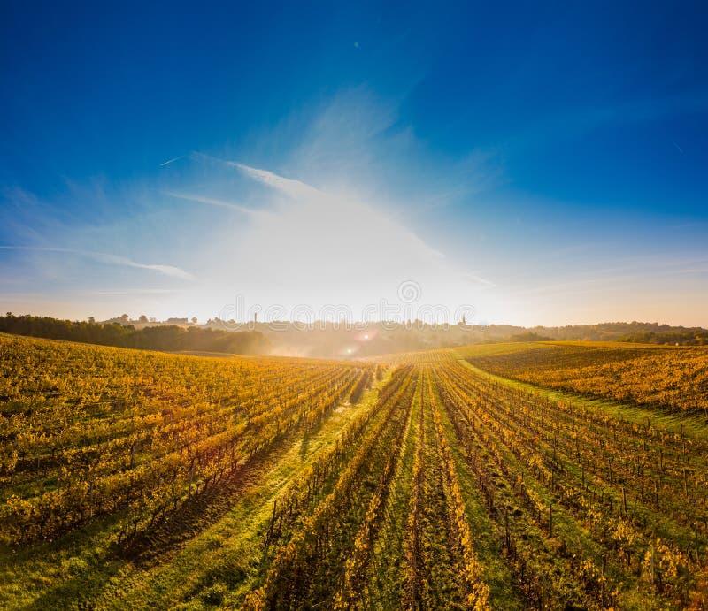 Vista aérea, nascer do sol do vinhedo no outono, vinhedo do Bordéus, França fotografia de stock royalty free