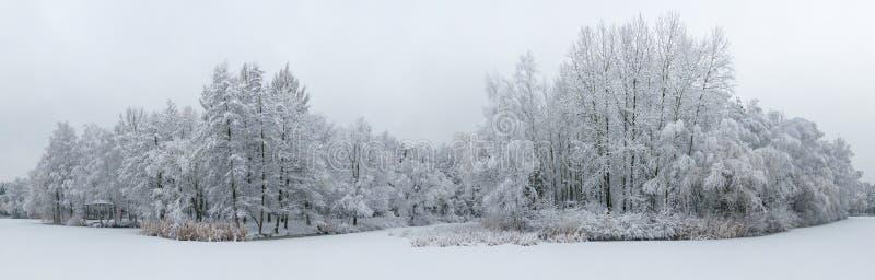 Vista aérea panorámica del paisaje hermoso del invierno con los árboles cubiertos con escarcha y nieve Paisaje del invierno desde imagen de archivo
