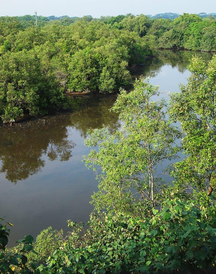 Vista aérea, pantanal tropical dos manguezais imagens de stock