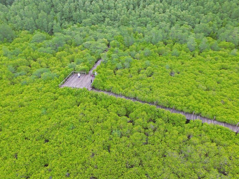 Vista aérea pelo zangão da floresta indiana dos manguezais com um par que fotografa no passeio à beira mar de madeira, província  fotografia de stock