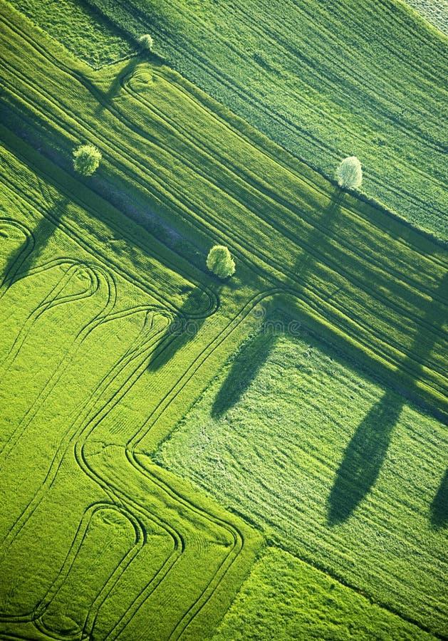 Vista aérea: Quatro árvores e sombras em um campo imagens de stock royalty free