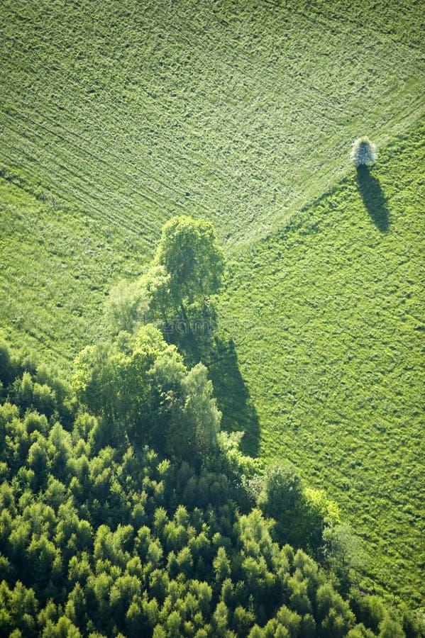 Vista aérea: Uma árvore isolada em um campo imagens de stock