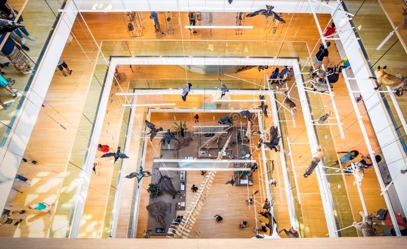 Vista abaixo do musa moderno do vão das escadas - Trento - Itália imagem de stock