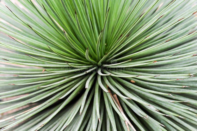 Vista abstracta de la planta del cactus imagen de archivo