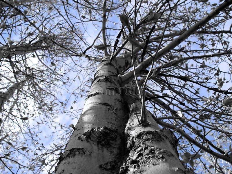 Vista Abstracta Del árbol Foto de archivo libre de regalías