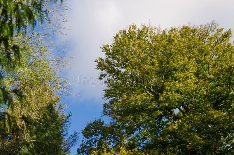 Vista acima ao céu e às árvores fotografia de stock royalty free