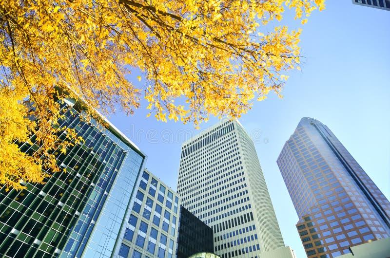 Vista acima em arranha-céus altos fotografia de stock royalty free