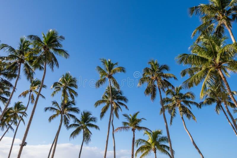 Vista acima em palmeiras tropicais contra um céu ensolarado azul brilhante imagens de stock