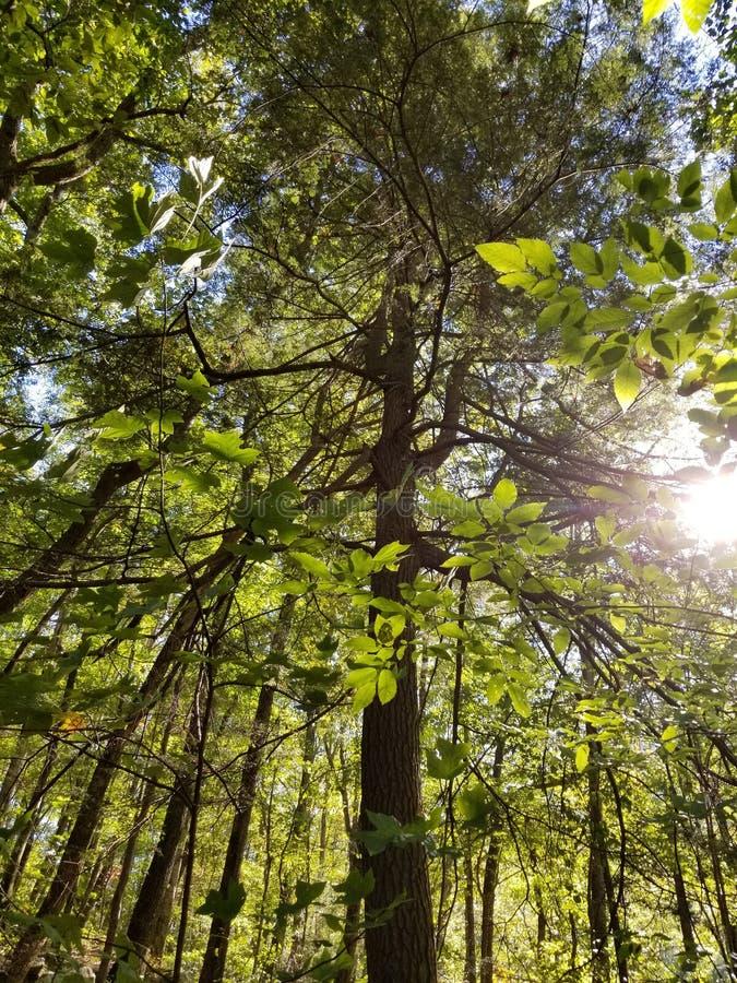 Vista acima na floresta imagem de stock