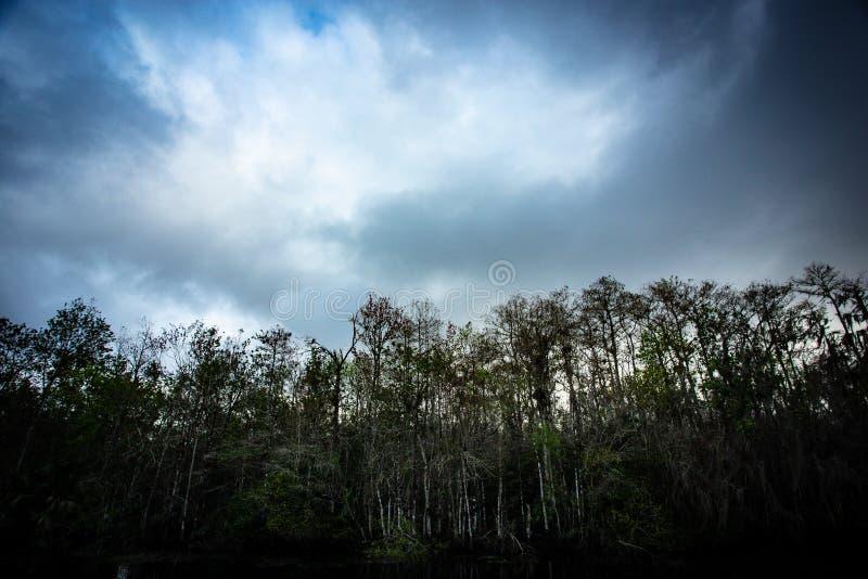 Vista acima nas árvores de Cypress dentro ao céu foto de stock royalty free