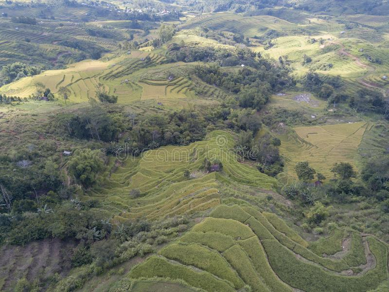 Vista aerea che osserva giù le risaie fotografie stock