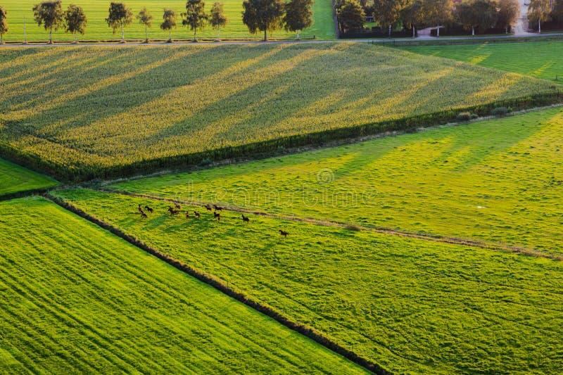 Vista aerea dei cavalli in fuga e delle ombre lunghe fotografie stock