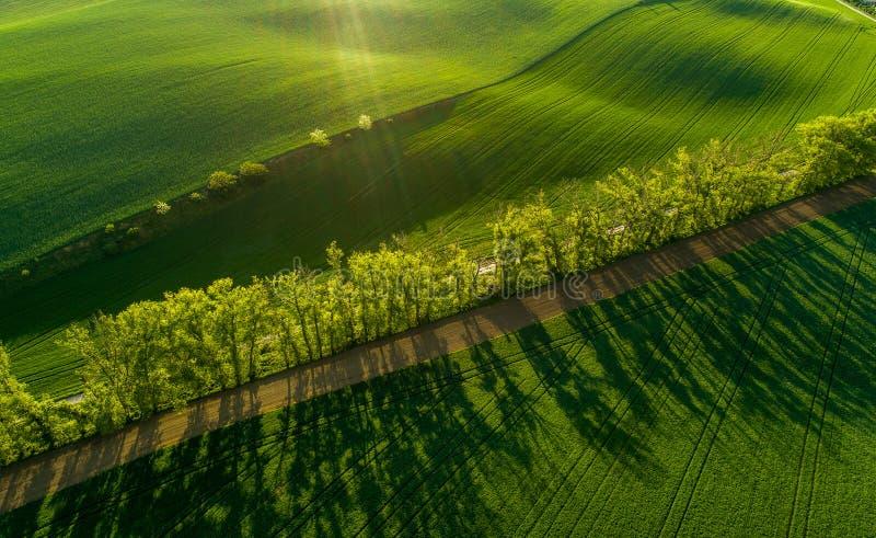 Vista aerea dei giacimenti di grano e degli alberi verdi in Moravia fotografia stock libera da diritti