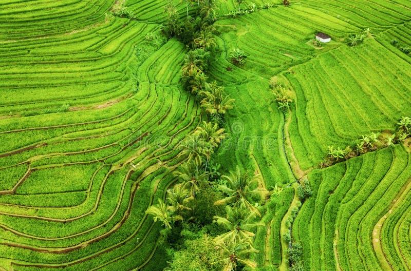 Vista aerea dei terrazzi del riso Paesaggio agricolo dall'aria Terrazzi del riso di estate Patrimonio mondiale dell'Unesco - Jati fotografia stock