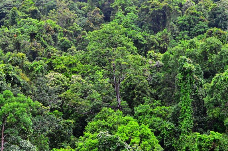 Vista aerea del baldacchino Queensland del parco nazionale di Daintree australe fotografia stock libera da diritti