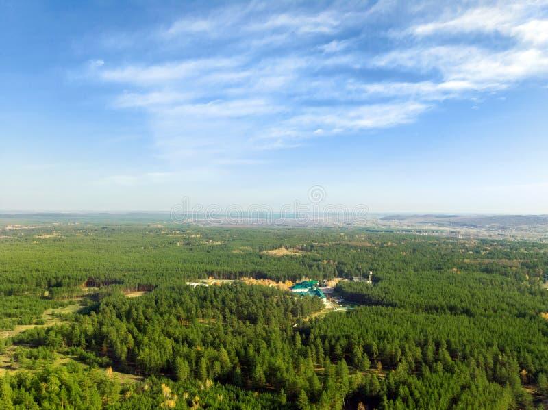 Vista aerea del foret del pino piantato uomo sempreverde File di Straighr degli alberi Inverdimento del pianeta ed ecologico immagine stock
