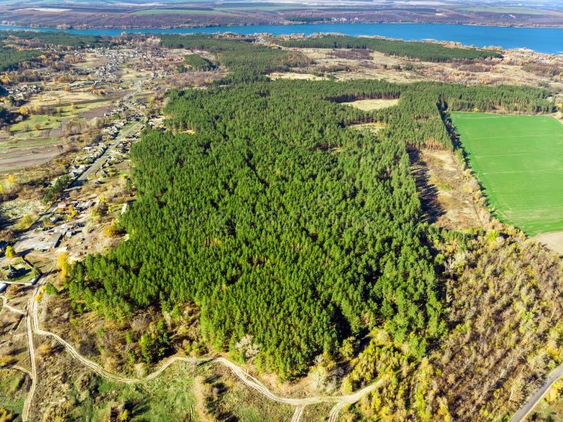 Vista aerea del foret del pino piantato uomo sempreverde File di Straighr degli alberi Inverdimento del pianeta ed ecologico immagini stock