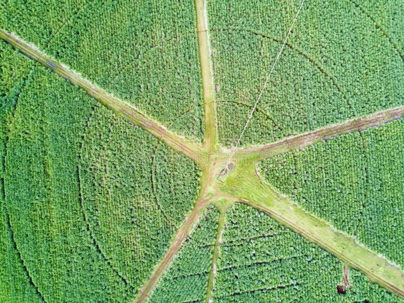 Vista aerea del giacimento circolare della canna da zucchero con l'incrocio di strade immagini stock libere da diritti