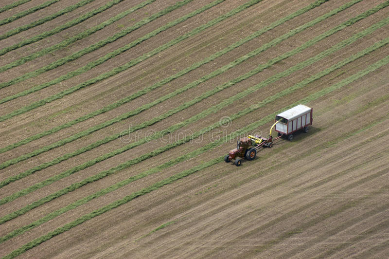 Vista aerea del giacimento del trattore del fieno di taglio del coltivatore di latteria immagine stock libera da diritti