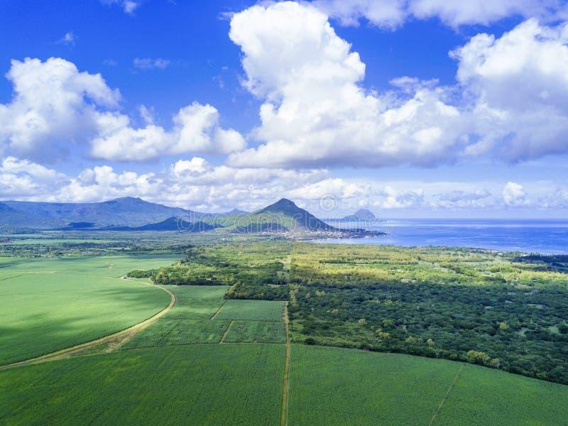 Vista aerea del giacimento della canna da zucchero delle Mauritius con le montagne immagine stock libera da diritti