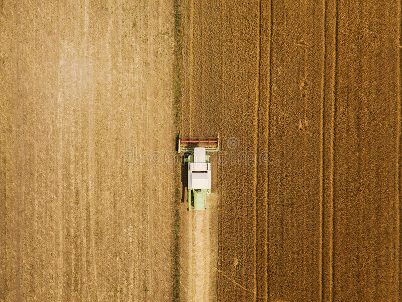 Vista aerea del grano harevsting della mietitrebbiatrice fotografia stock libera da diritti