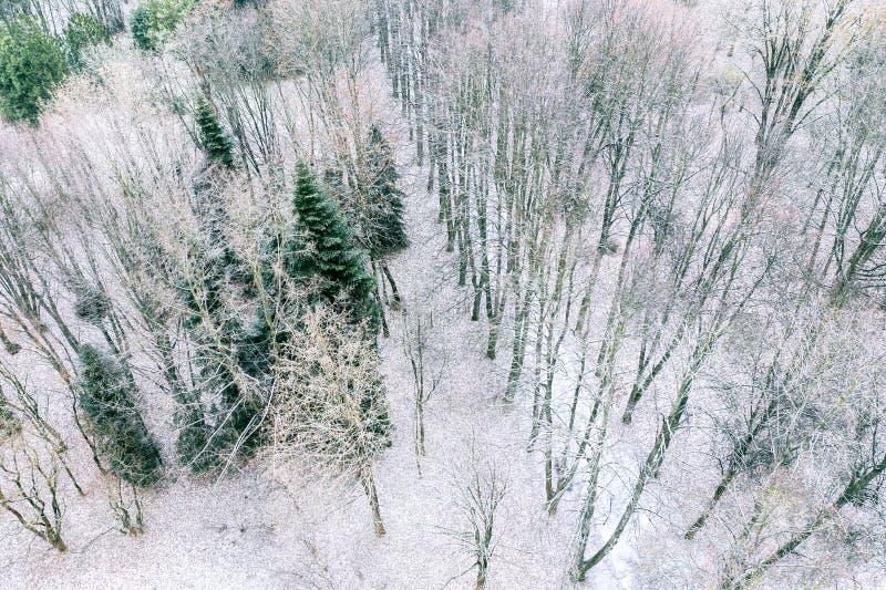 Vista aerea del parco della città coperta di prima neve nel giorno gelido immagine stock