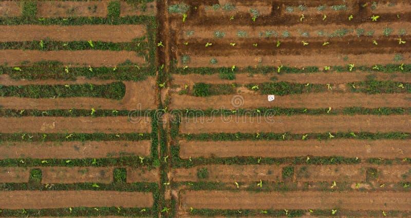 vista aerea dell'azienda agricola con il sistema di irrigazione a scorrimento le vie strette dell'acqua come un uomo hanno fatto  fotografie stock libere da diritti