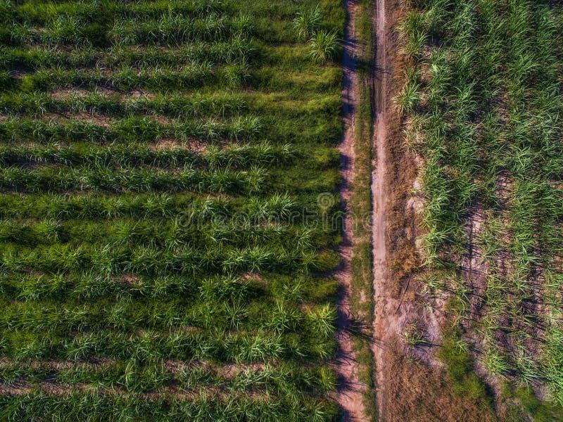 Vista aerea dell'azienda agricola e della strada non asfaltata verdi della canna da zucchero fotografie stock libere da diritti