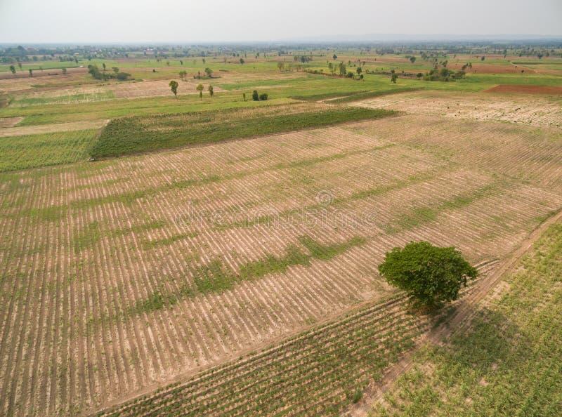 Vista aerea della canna da zucchero immagini stock