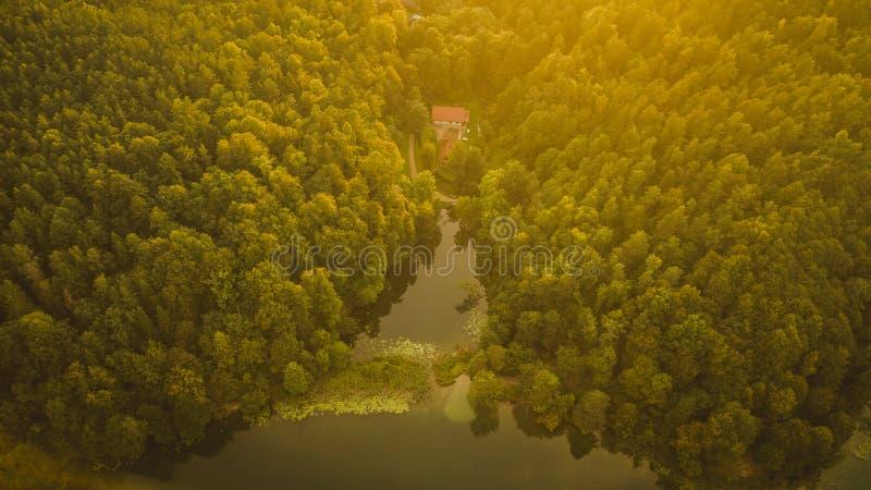 Vista aerea della foresta e del lago durante il tramonto di estate immagini stock libere da diritti