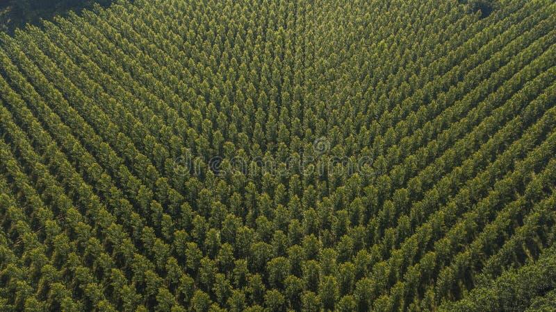 Vista aerea della foresta in Gironda, piantagione, Francia fotografia stock