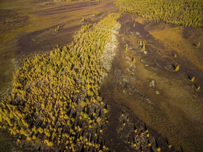 Vista aerea della foresta nell'Estremo Oriente, Russia fotografia stock libera da diritti