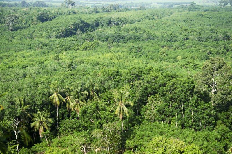 Vista aerea della foresta vicino a Thale Noi Waterfowl Reserve Park immagine stock