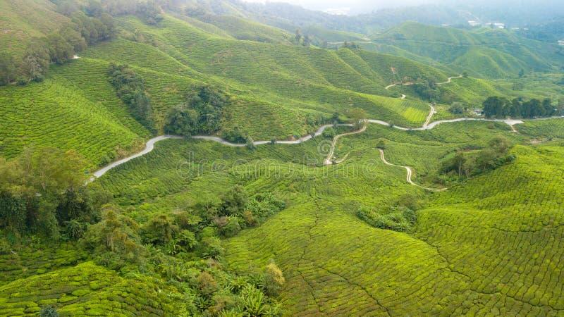 Vista aerea della piantagione di tè dell'altopiano di Cameron fotografia stock libera da diritti