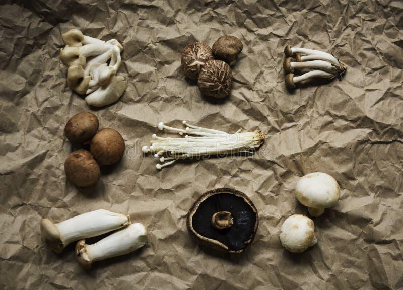 Vista aerea della raccolta stabilita del vario fungo organico fresco fotografia stock