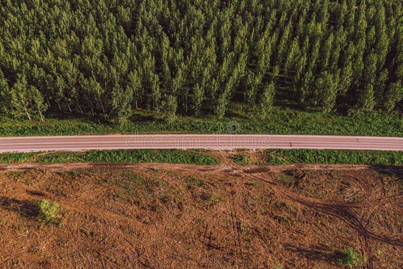 Vista aerea della strada fra la foresta del pioppo e l'area disboscata fotografia stock libera da diritti